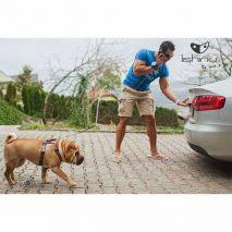 lishinu2-dog-leash-car-epets