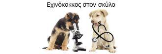 εχινόκοκος τι είναι και πως να προστατέψετε τον σκύλο σας