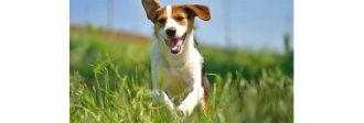 η κατάλληλη φροντίδα για τον σκύλο σας, epets pet shop
