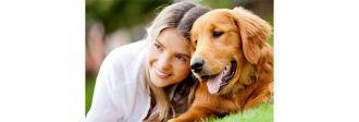 Εκπαιδευτείτε για τον σκύλο σας