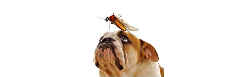 Διροφιλαρίωση στον σκύλο και την γάτα epets