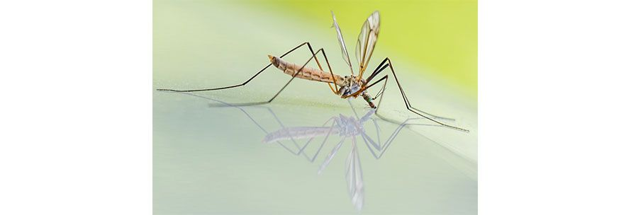Καταπολέμηση κουνουπιών και σκνιπών