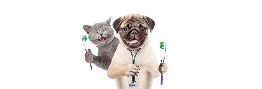 Καθαρισμός δοντιών σκύλου και γάτας