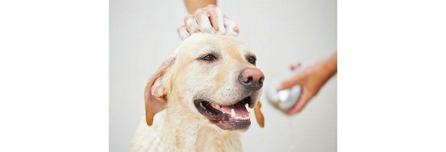 Μπορώ να κάνω μπάνιο τον σκύλο μου με ανθρώπινο σαμπουάν?
