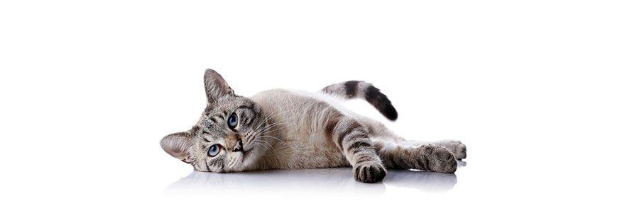 Το Μαρκάρισμα της γάτας